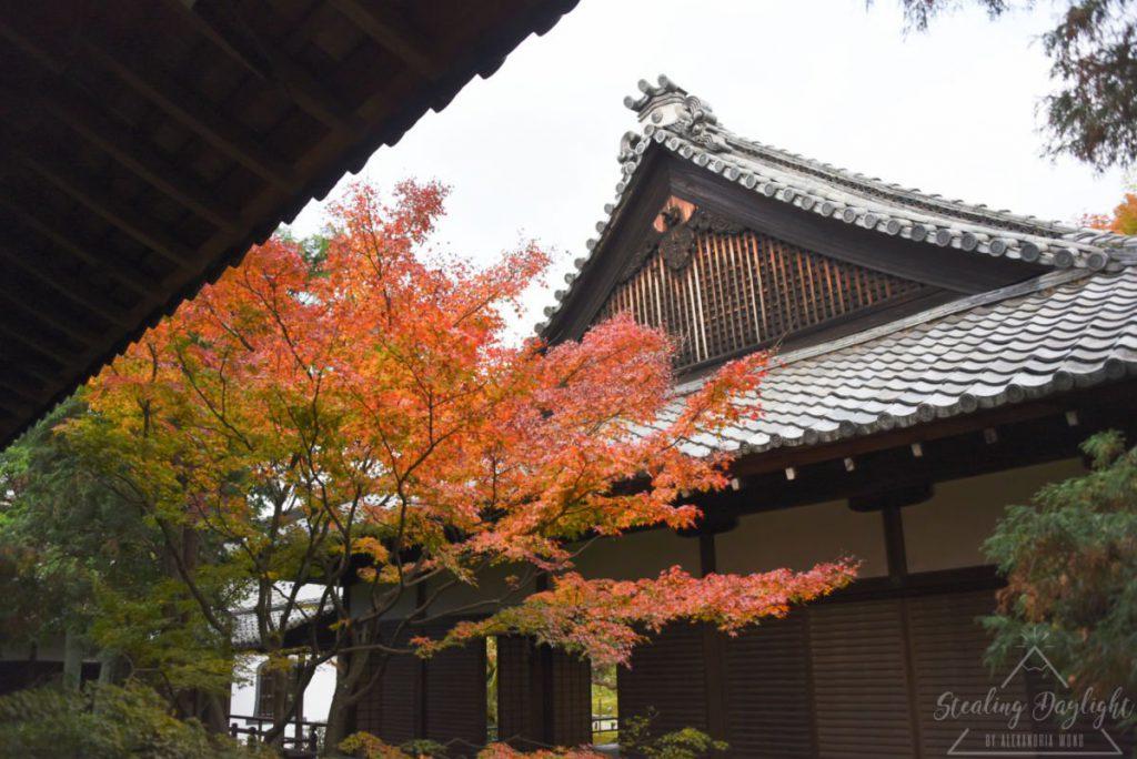 青蓮院門跡 紅葉