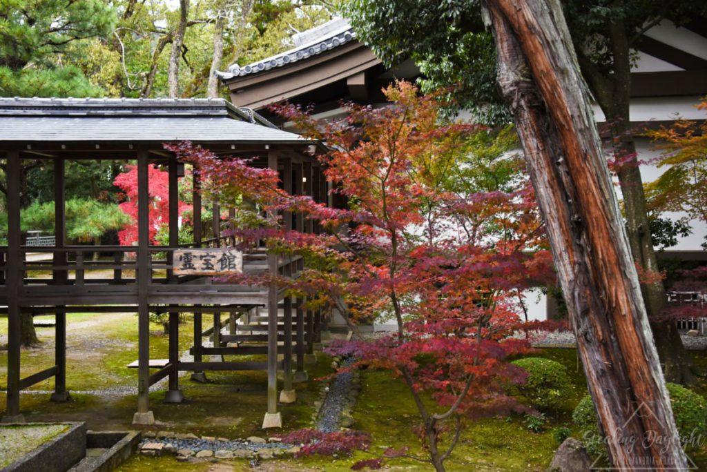 大覺寺 紅葉