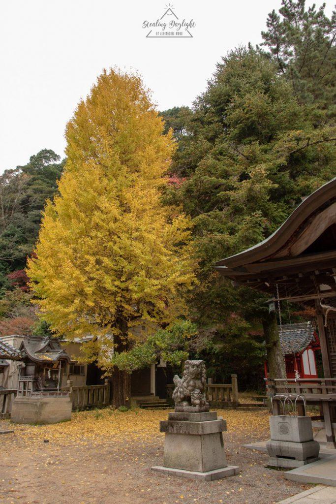 兵庫 城崎溫泉