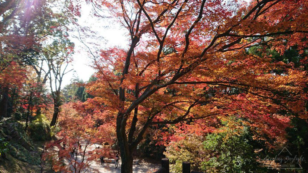 京都 北野天滿宮 御土居