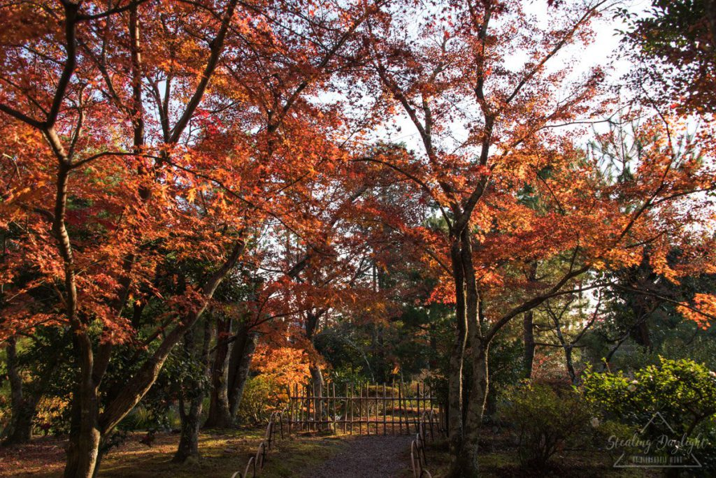 京都 等持院