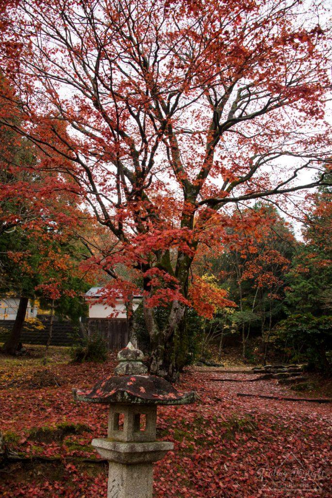 滋賀 神前神社 紅葉