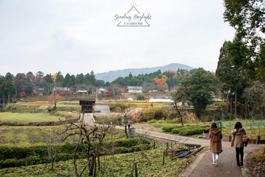 滋賀 雞足寺 藥草園