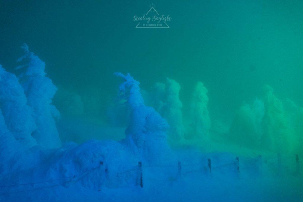 山形 藏王溫泉 纜車 地藏山頂站 樹冰